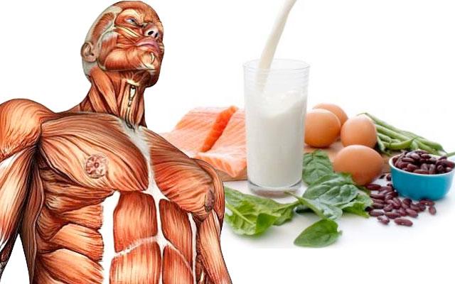 Proteína animal ou vegetal