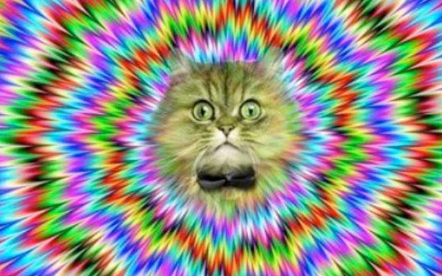 trip lsd hallucination alucinar moca acido
