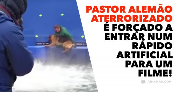 Pastor Alemão Aterrorizado é Forçado a Entrar na Água... para um filme!