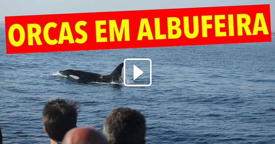 WOW! Quatro Orcas Surpreenderam Albufeira