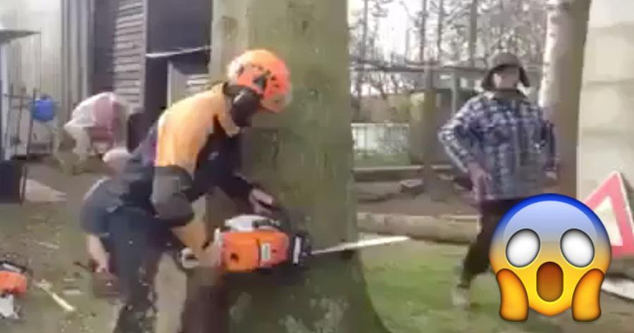 Nunca Viste Cortar uma Árvore Assim
