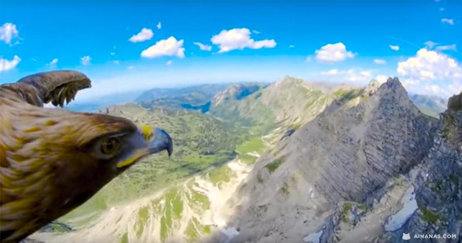 ÉPICO: Os Alpes vistos por uma Águia