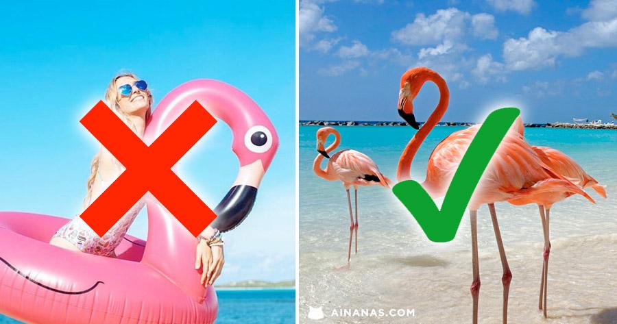 BEM MELHOR do que uma boia em formato de Flamingo