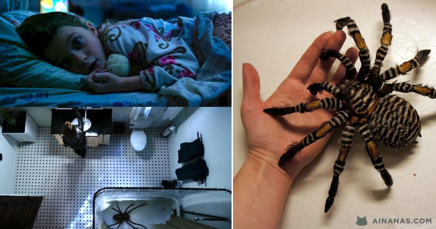Tens medo de Aranhas? Não vejas isto!
