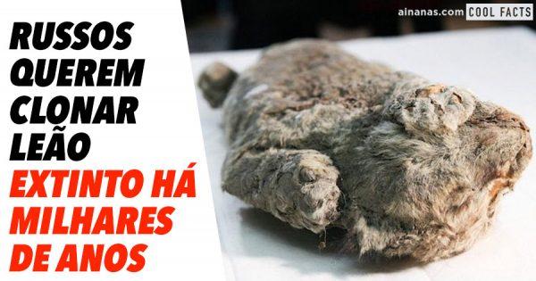 Foi descoberto leão das cavernas com 50 mil anos.. e os russos querem cloná-lo!