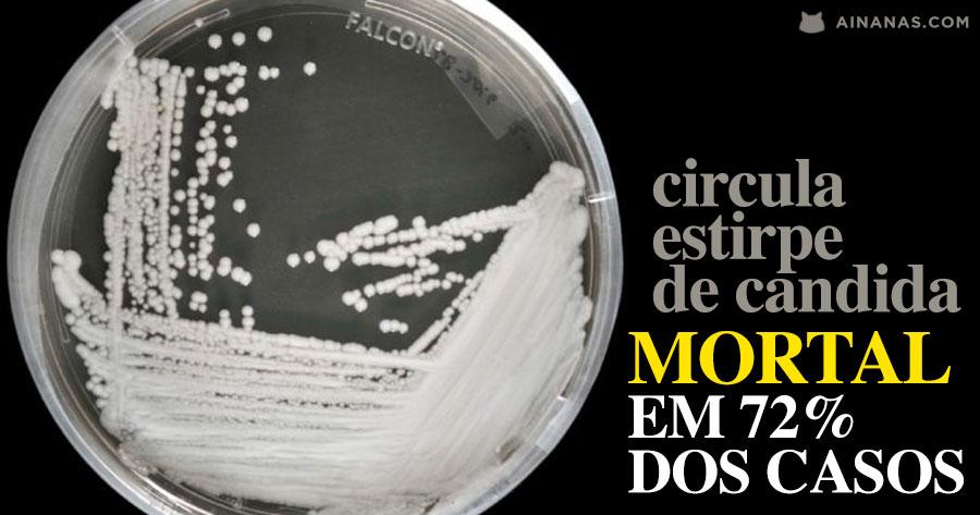 CANDIDA AURIS: o fungo que está a assustar o mundo