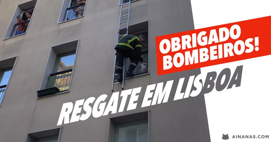 Bombeiros salvam cão preso nas Grades de uma Varanda em Lisboa