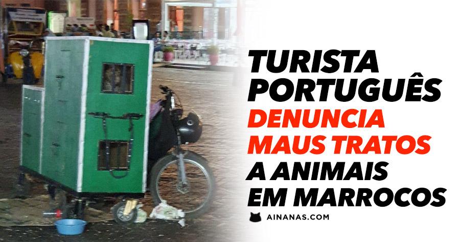 Turista português denuncia MAUS TRATOS a Animais em Marrocos
