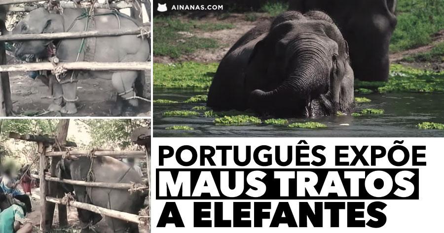 Português EXPÕE MAUS TRATOS a Elefantes