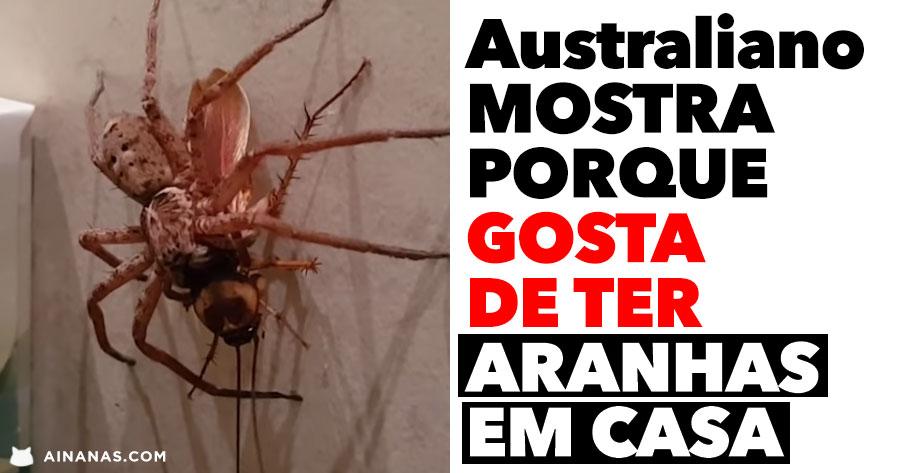 Australiano mostra porque GOSTA DE TER aranhas em casa