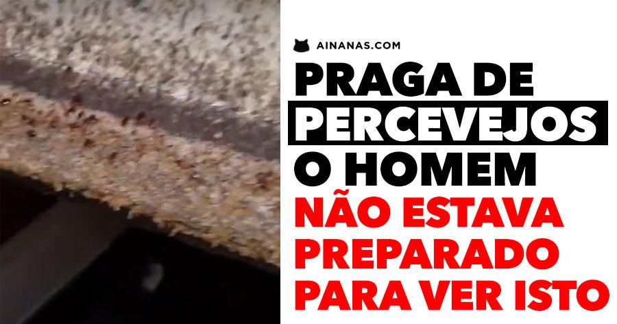 PRAGA DE PERCEVEJOS choca especialista em desinfestação