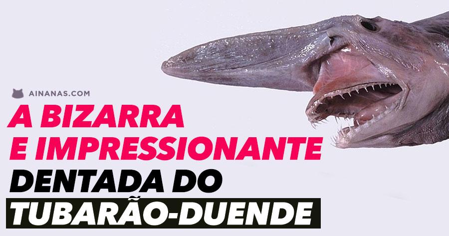 A Bizarra e Impressionante DENTADA do Tubarão-Duende