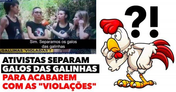 Ativistas separam GALOS DAS GALINHAS para acabar com as