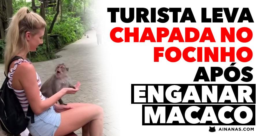 Turista LEVA CHAPADA após Enganar Macaco
